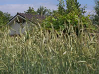 Droevendaalse Landbouwstaat